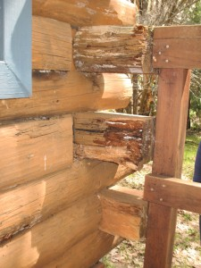 Log rot on log ends from water damage