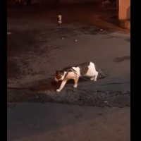 This dog saves this cat