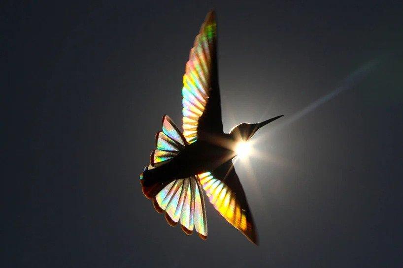 Christian Spencer - Rainbows hummingbird wings 5