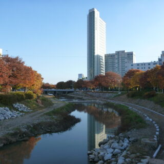 medical korean translatoni, medical korean translator - Autumn Foliage Along Ansan Creek