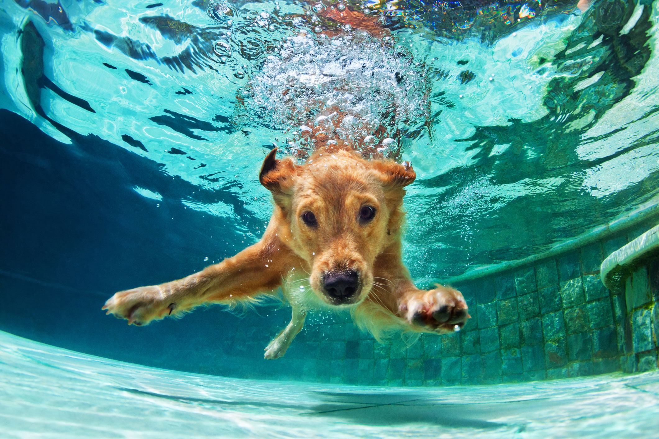 Swim at In the Doghouse Boarding