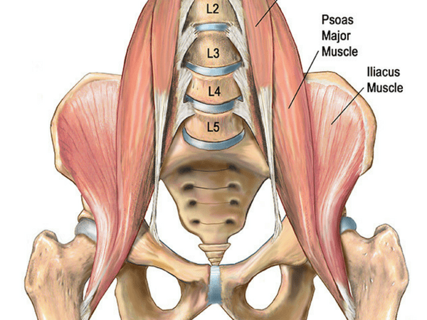 hip-flexor-muscles
