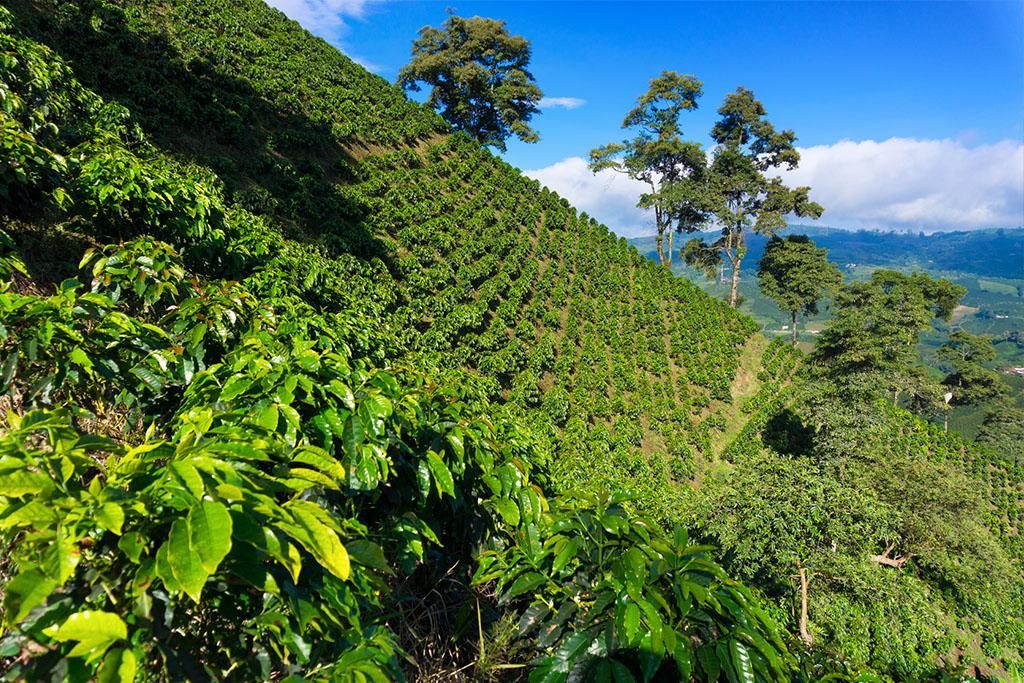plantacion (1)