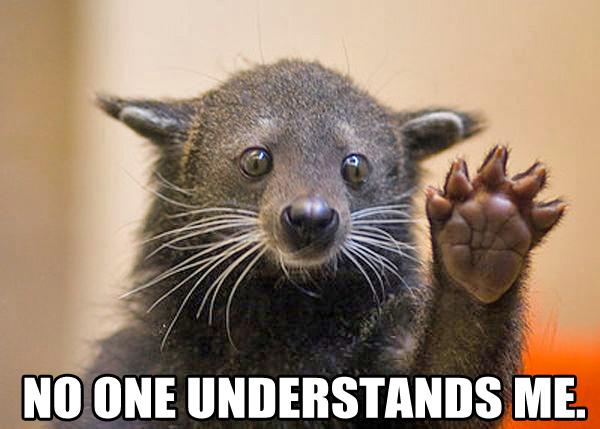 bearcat-1