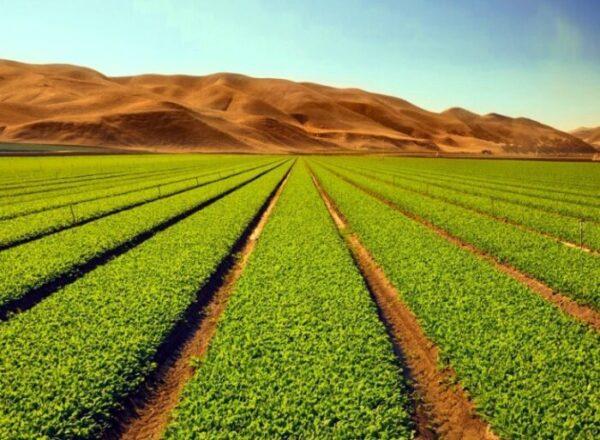 ¿SEGUNDA REFORMA AGRARIA?…MEJOR REVISEMOS LA PRIMERA…