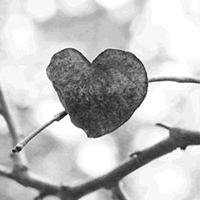 heartleaf-1