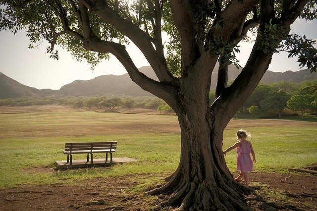 photo of a field with mountains in the background a bench a large tree with a little girl in a pink dress