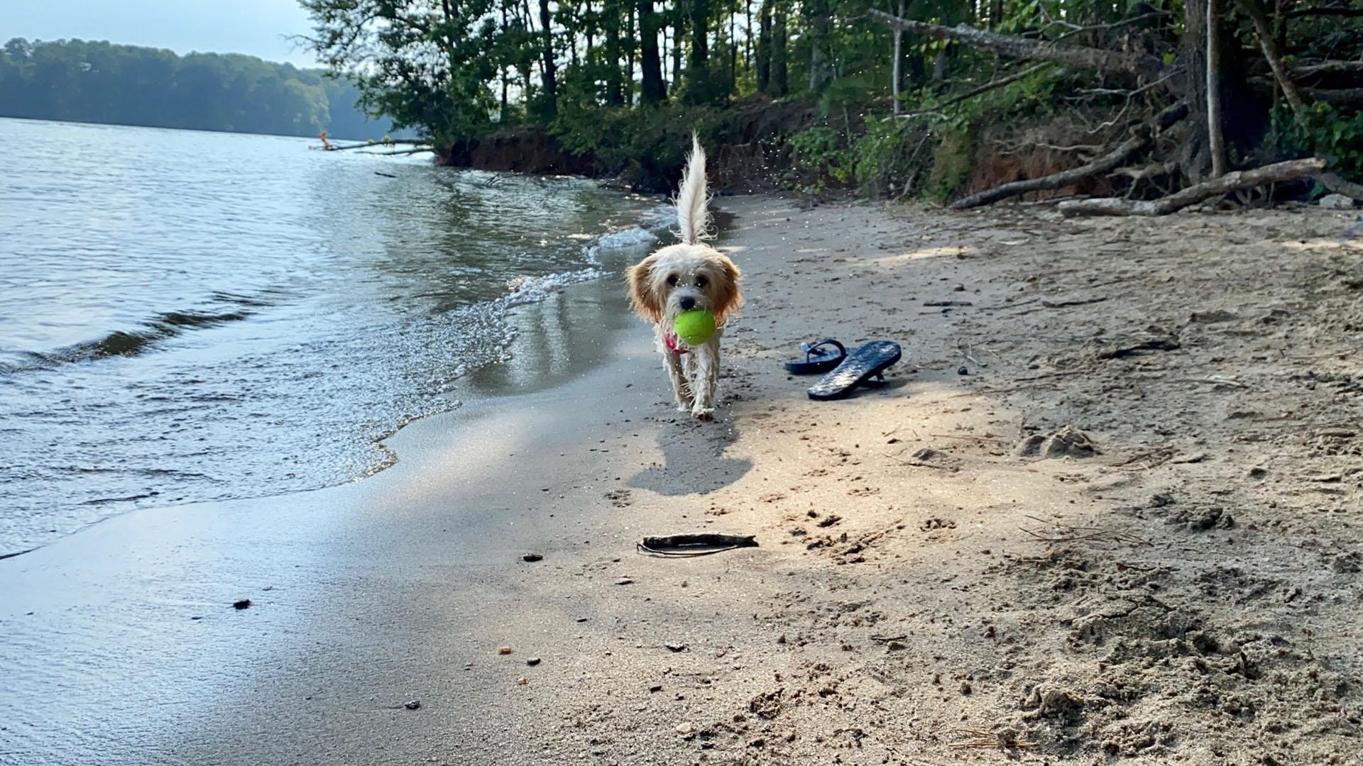 Dog playing on the beach at Lake Lanier