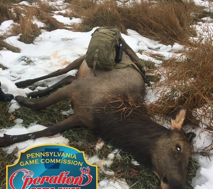 Game commission looking for Elk poachers