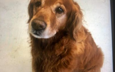 Manheim Borough Police find dog, looking to locate owner