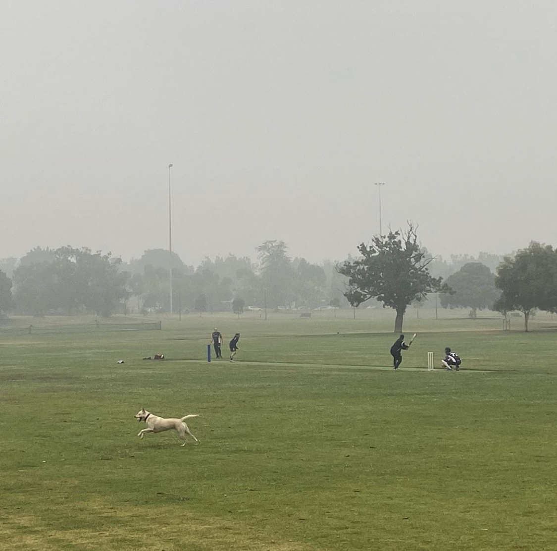Playing Cricket in the smoke