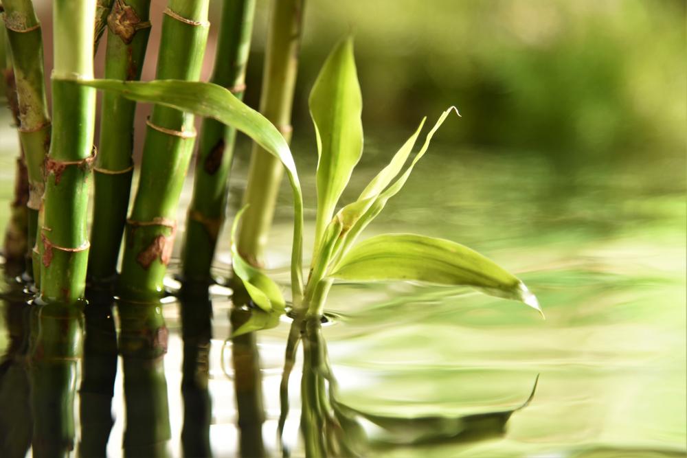 bamabu air
