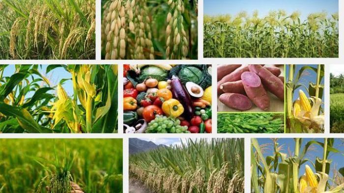 tanaman pangan