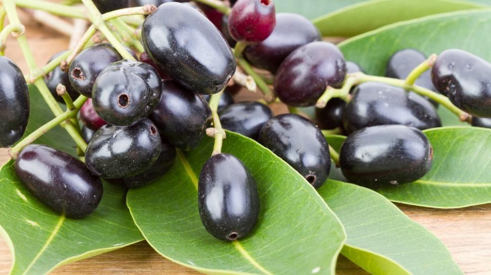 buah jamblang