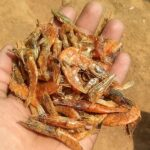 FRIED-DRY-PRAWNS-8-K-6-X6-P1