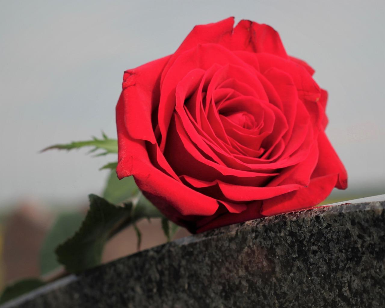 red rose, love symbol, black marble