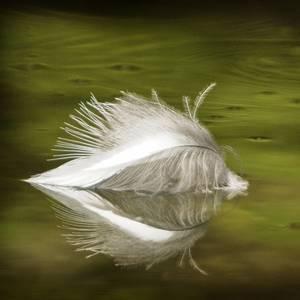 Flotsam Feather Kingfisher Feather