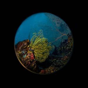 Underwater World Living Reef
