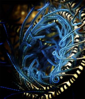 Bookmark-Blue Spiral