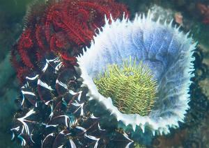 Greeting-Card-Crinoid Bouquet