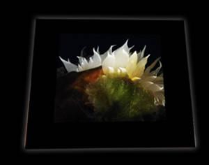 Keepsake Box-Nudibranch Blossom