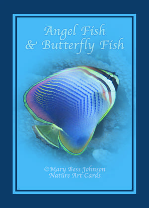 Playing Card - Angel Fish & Butterfly Fish Back