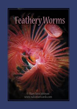 Playing Card - Feathery Worms Back