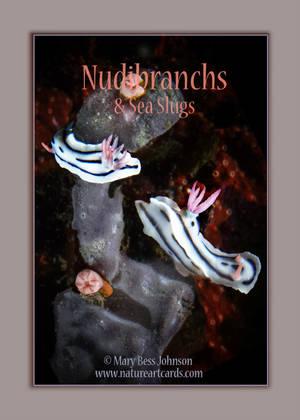 Playing Card - Nudibranchs & Sea Slugs Back