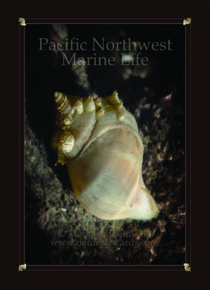 Playing Card - Pacific Northwest Marine Life Back