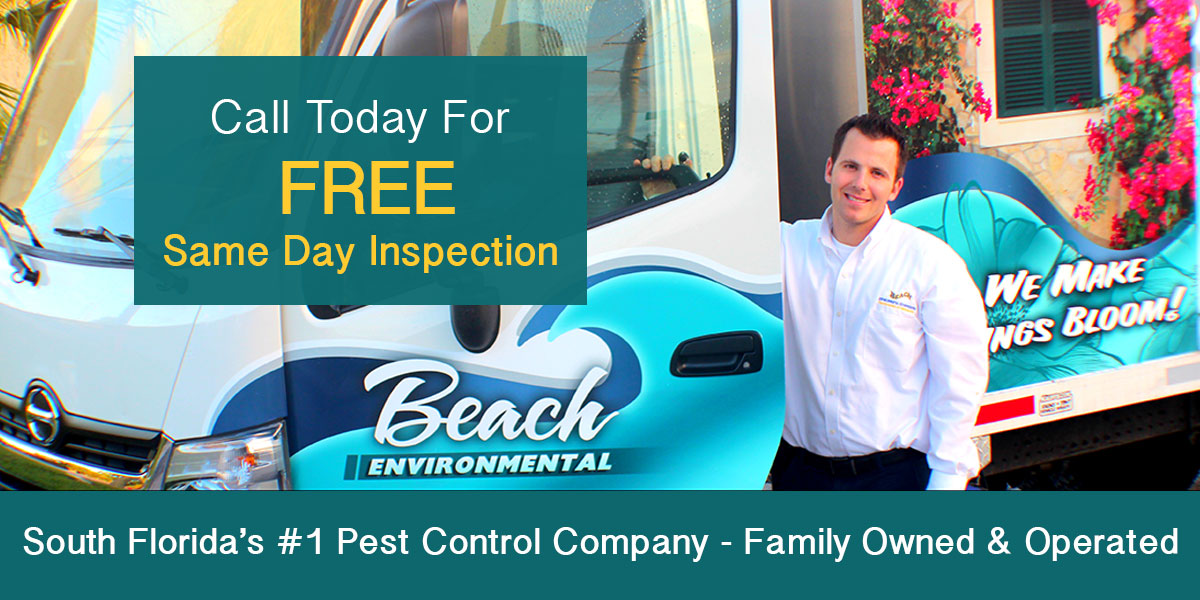 Ant Removal Services
