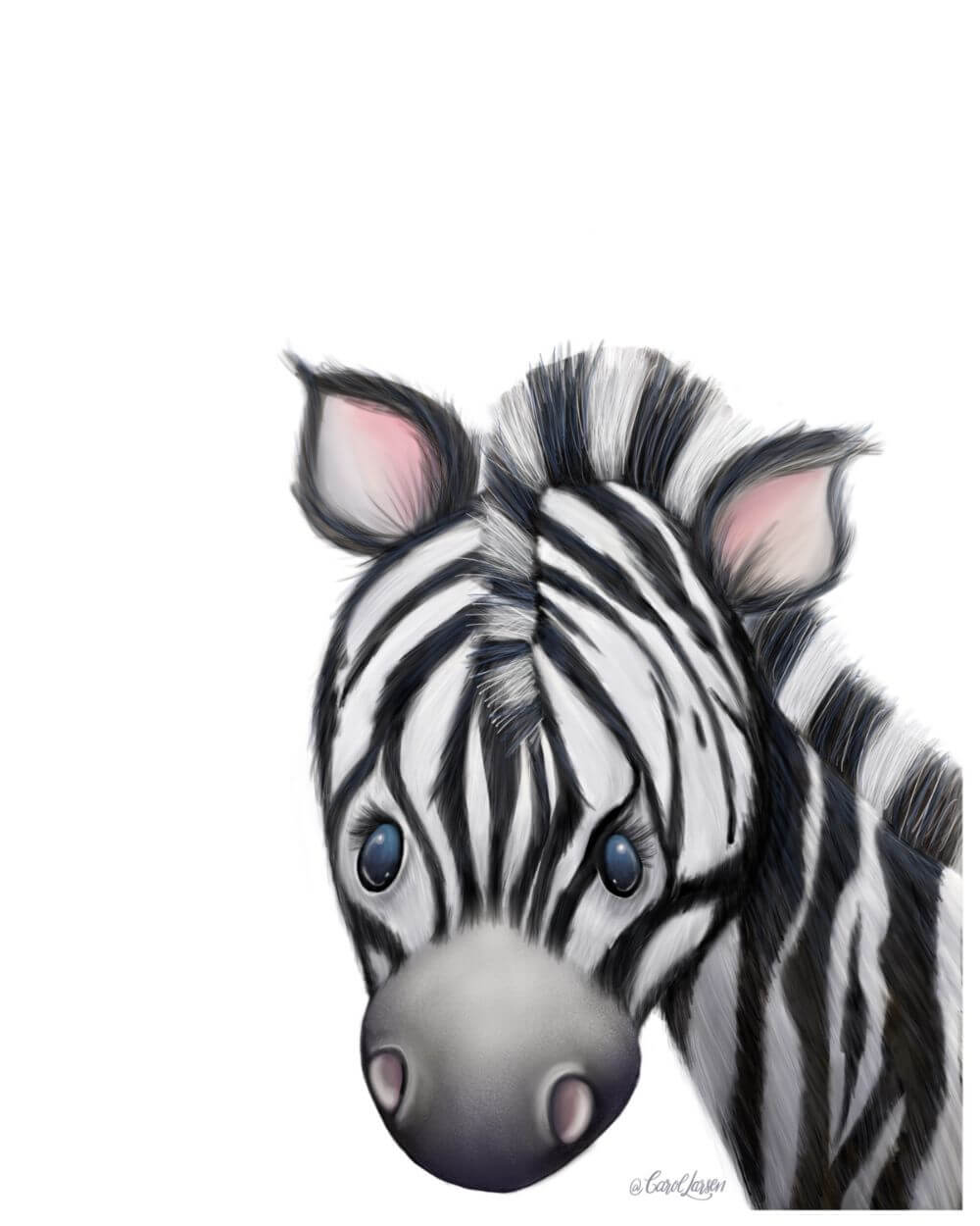 Name-Zebra on White Background_Tag-Animals_Collection-All Seasons.