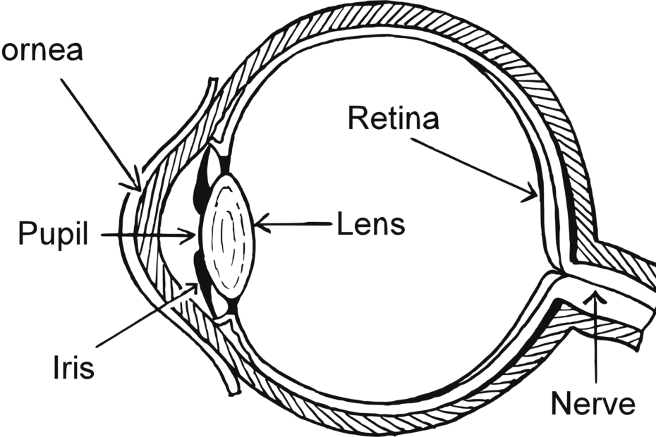 Structure of Eye