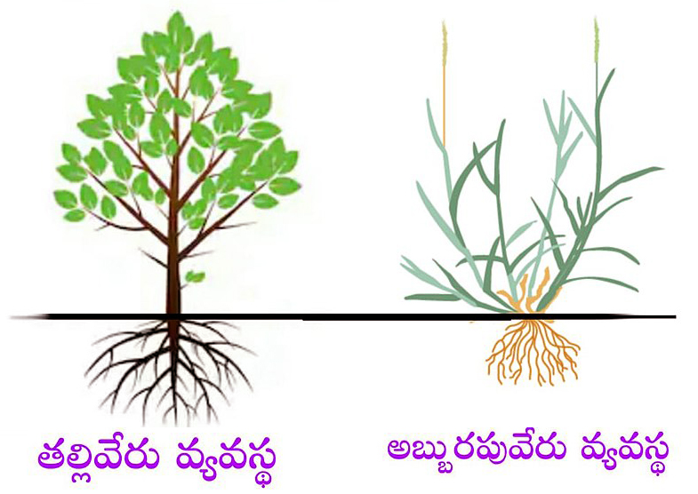 roots-types