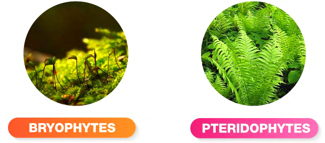 difference-between-bryophytes-and-pteridophytes1