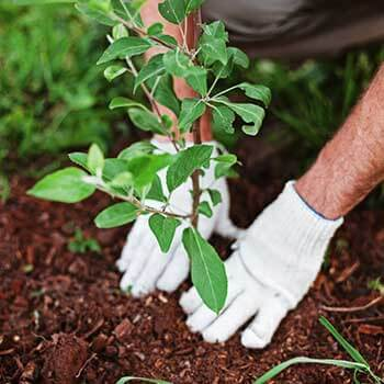 Tree-Planting-350x350
