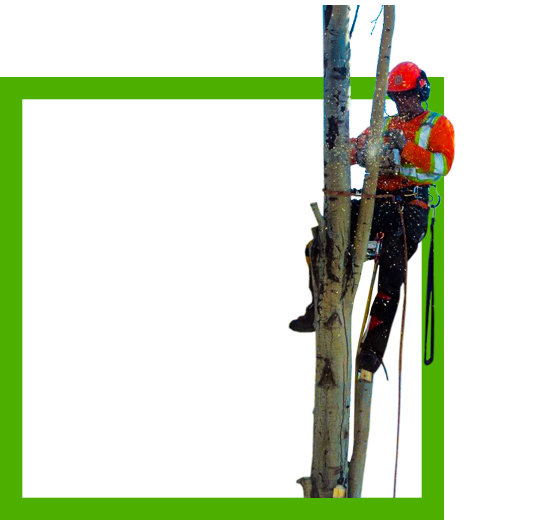 tree-removal-felling