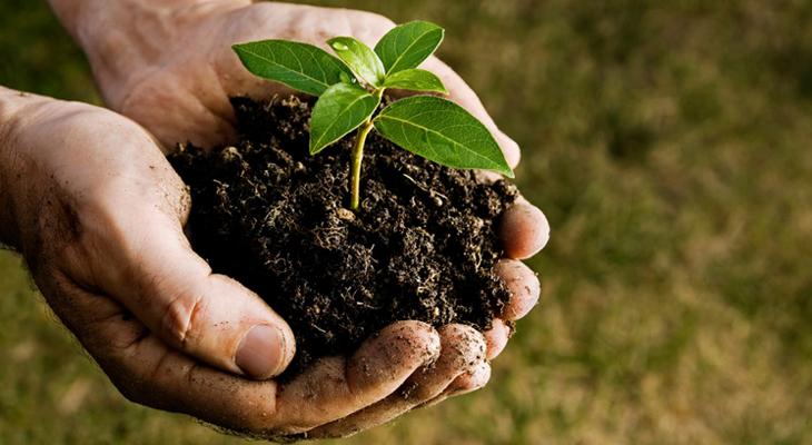 Characteristics Of Plant Health Care