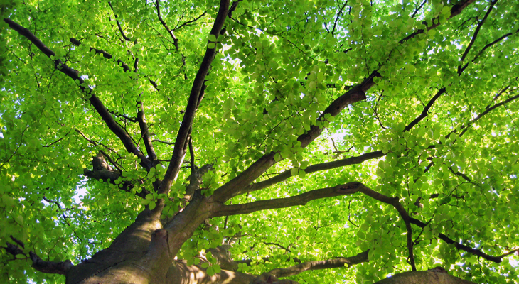 How To Take Care Of Trees During The Spring Season