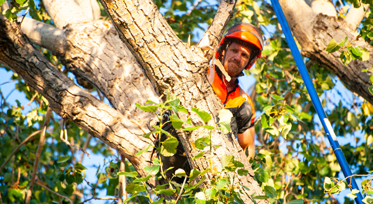 Why Should You Hire A Certified Arborist?