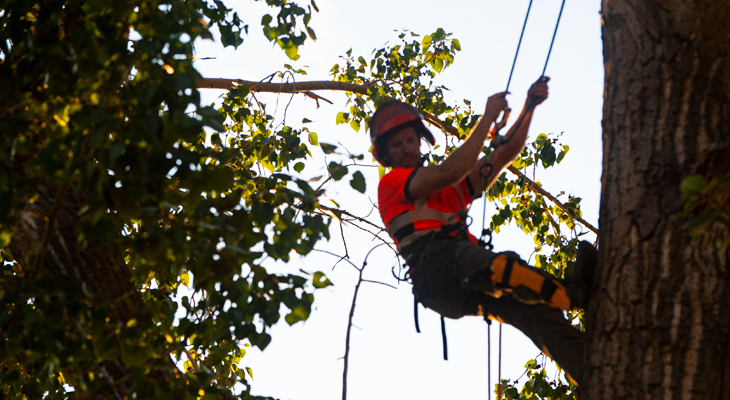 Basic Traits Of A Professional Tree Removal Service