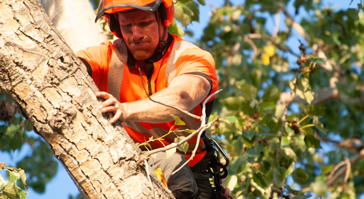 When Tree Removal Becomes Inevitable, Hire Professionals