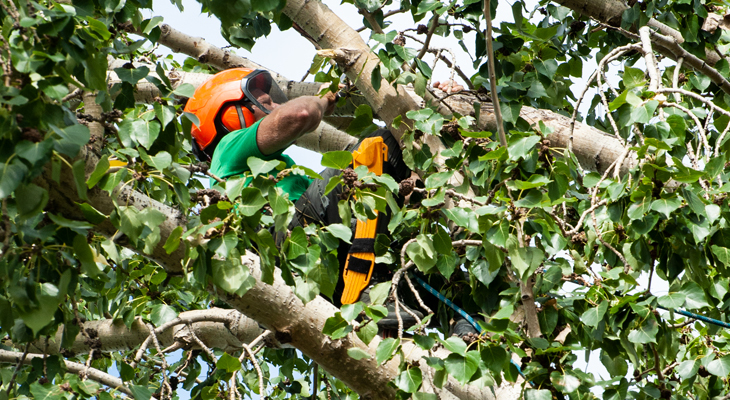 Tree Services – Frequently Asked Questions