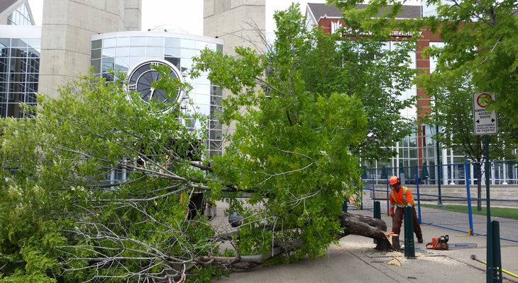 Warning Signs It Might Be Time To Remove Your Tree