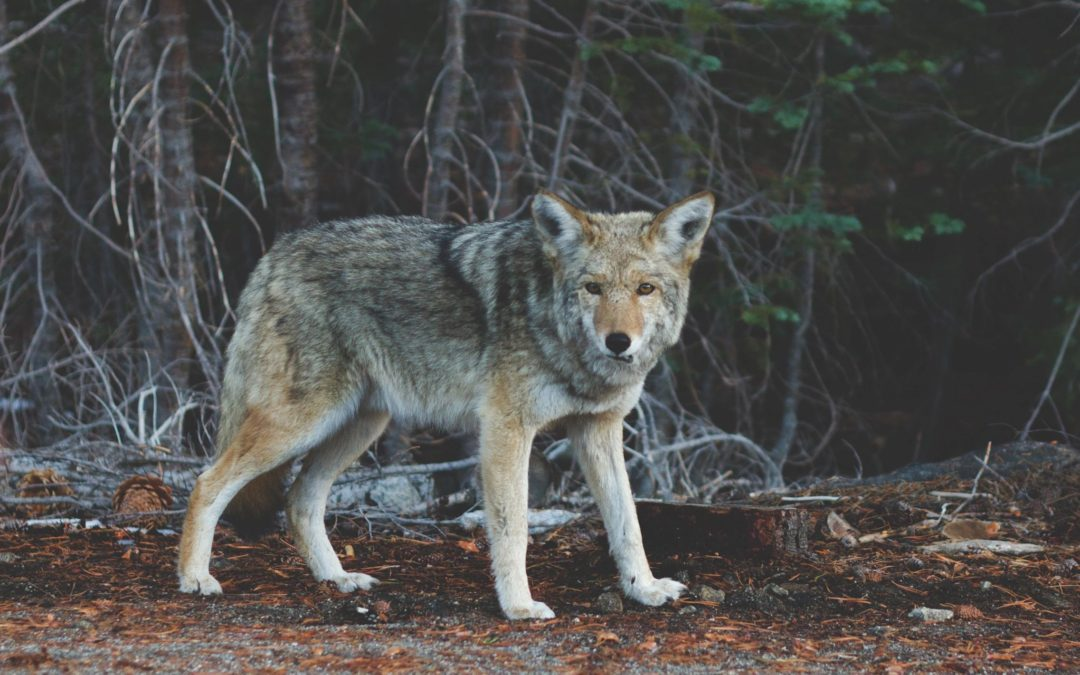Coyote for Great West Casualty PTAB Estoppel Decision