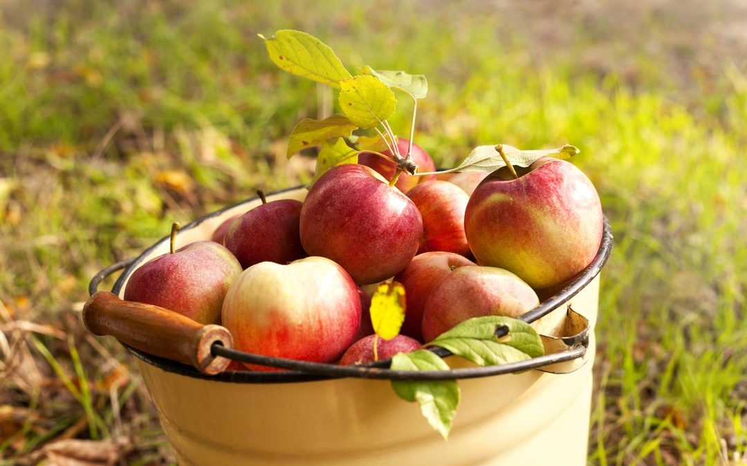 Picture of apples for case about Apple
