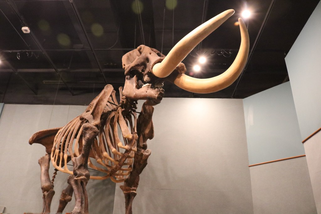 giant-mastadon Museum of Florida History