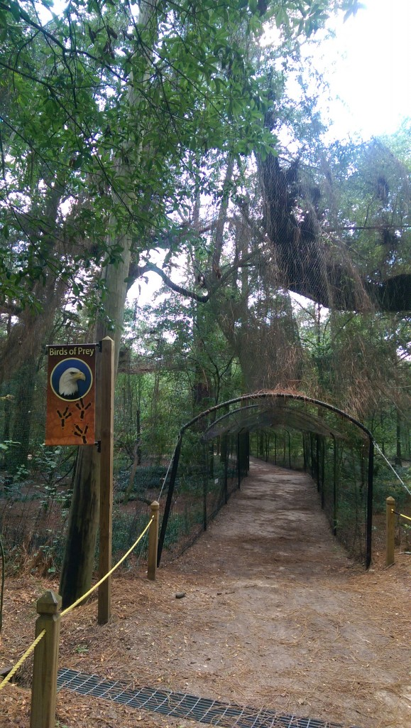 Tallahassee Museum - Nature Trail - birds