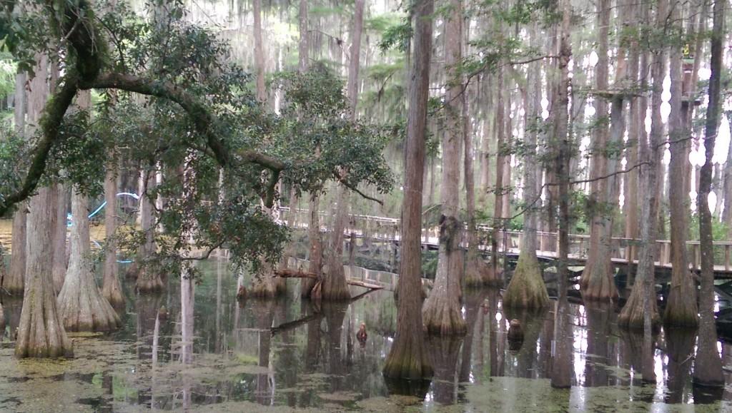 Tallahassee Museum - Lake