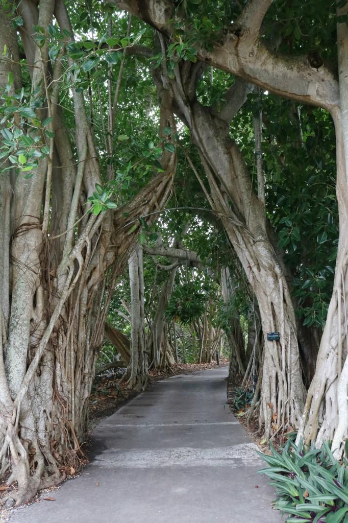 Marie Selby Botanical Gardens - Sarasota