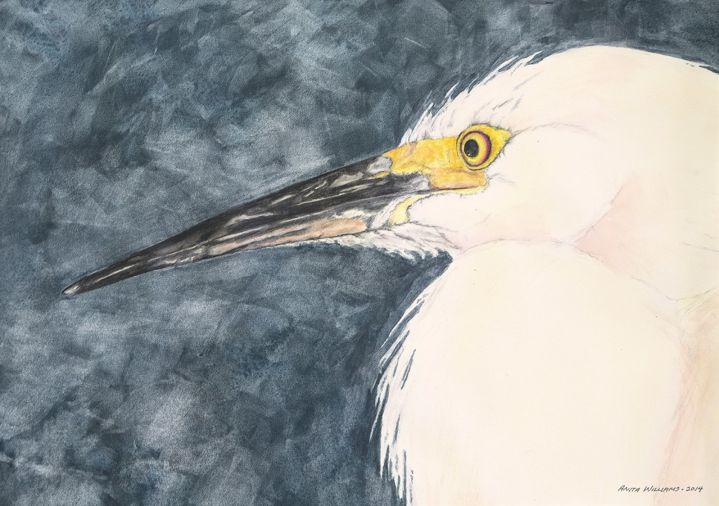 White Egret in watercolor. Close up of head and eye.